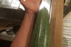 zucchinona